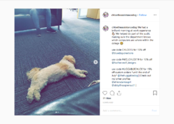 """Screenshot_2019-07-10 Chloe the Assistance Dog on Instagram """"We had a brilliant morning at wor...png"""