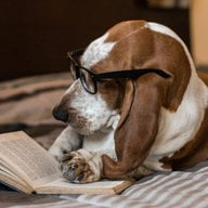 The Wisdom of Bassets
