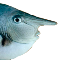 Long-Nosed Fish